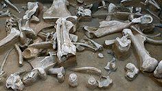"""Paleolityczna """"matrioszka"""". Zaskakujące odkrycie naukowców na Syberii"""