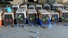 Amerykańskie wojsko pod ostrzałem krytyki. Pentagon tłumaczy się ze zdjęcia psów, które obiegło internet