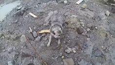 Uratował psa. Osuwisko wciągnęło go do wody