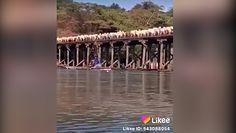 Setki krów na starym moście. Niebezpieczna przeprawa przez rzekę