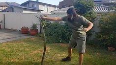Australia. W ogrodzie zadomowił się śmiercionośny wąż