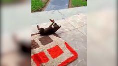 Zabawa szczeniaka z motylem. Śmieszne nagranie, które stało się hitem internetu