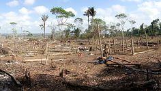 Pandemia z lasu deszczowego. Ekolog ostrzega