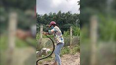 Złapała węża gołymi rękami. Przerażające nagranie z Wietnamu