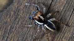 Odkryła przypadkiem nowy gatunek pająka. Znalazła go na swoim podwórku