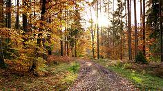 Początek astronomicznej jesieni. Prognoza pogody na najbliższe dni