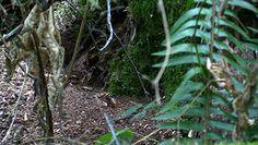 """Mieszkańcy amerykańskiego Blaine odkryli gniazdo """"morderczych"""" szerszeni"""