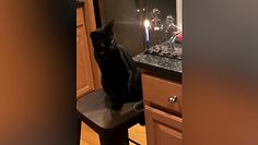 Łapą w świecę. Ciekawskiemu kotu nie spodobał się rezultat