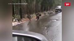 Psy w zaprzęgu ze starą Ładą. Kuriozalne nagranie ze środka Rosji