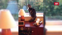 Kot codziennie żegna tak właściciela. Zabawne nagranie hitem sieci