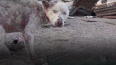 Historie tych zwierzaków wzruszały was do łez