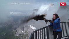 Przelot orła bielika. Spektakularne nagranie