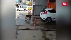 Myjnia dla... psa
