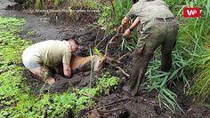 Jeleń w potrzasku. Nagranie dramatycznej akcji ratunkowej z Nadleśnictwa Browsk