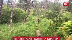 Bliskie spotkanie z niedźwiedziem. Para uciekła w krzaki