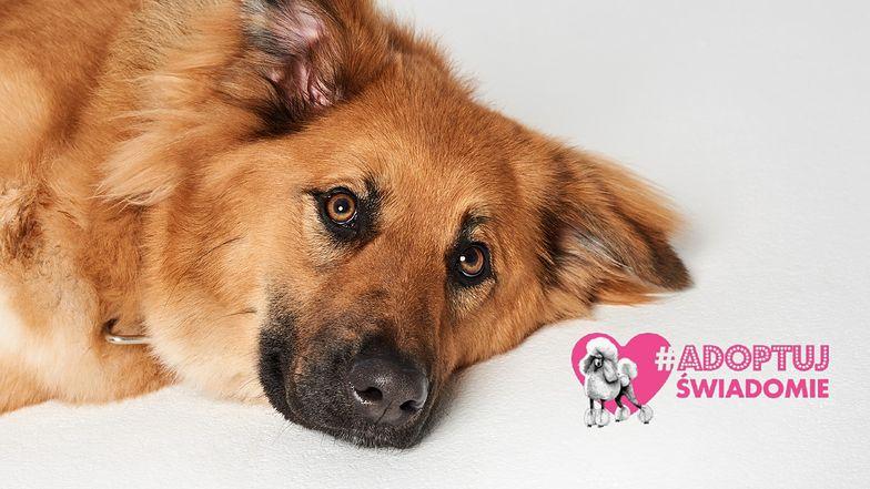 Roczna Mabaya przeszła metamorfozę w psim SPA! Pudelek szuka dla niej domu #AdoptujŚwiadomie