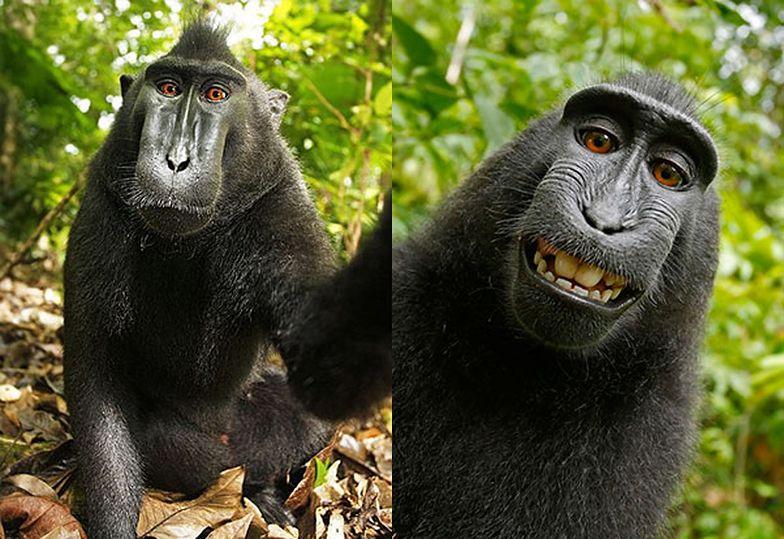 Ten makak ukradł aparat i zrobił sobie zdjęcie