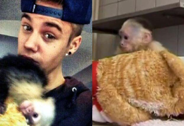 """Zostawił swoją małpkę w schronisku! """"PRZYTULA SIĘ DO JEGO ZDJĘCIA!"""""""