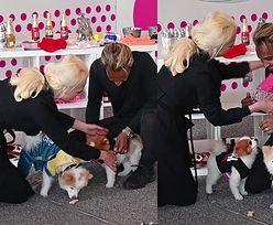 Iwona Burnat i Reggie wygłupiają się z psami przed paparazzi
