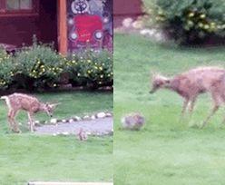 Bambi i Tuptuś naprawdę istnieją!