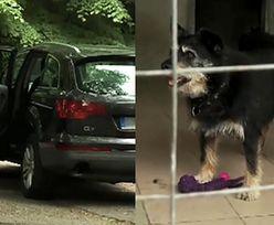 Bezmyślni Niemcy zostawili psa w aucie! Umarł z gorąca