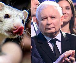 """""""Piątka dla zwierząt"""" nie trafi do dalszych prac. Koniec pomysłu Kaczyńskiego"""