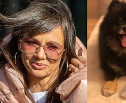 """Dobroduszny Czarek Lis apeluje do właścicieli zwierząt: """"Każdy może poprosić o pomoc w opiece nad psem na wypadek kwarantanny"""" (FOTO)"""
