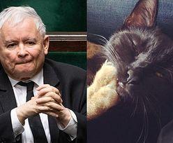 """Krzysztof Zalewski ostro o forsowaniu majowych wyborów. Wyzwał do walki... KOTA Jarosława Kaczyńskiego: """"Mój kot WP***DOLI pana kotu!"""""""
