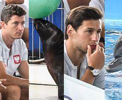 Lewandowski z kolegami podziwia foki z delfinami (ZDJĘCIA)