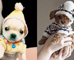 HIT SIECI: Małe zwierzątka w zimowych sweterkach (ZDJĘCIA)