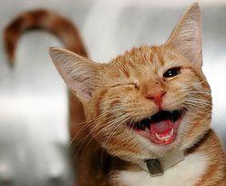 Najbardziej uśmiechnięte zwierzęta (ZDJĘCIA)