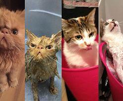 Zwierzęta przed i po kąpieli... (ZDJĘCIA)