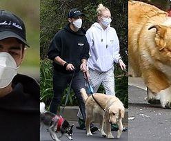 Joe Jonas i ciężarna Sophie Turner wyprowadzają na spacer gromadę uradowanych psiaków (ZDJĘCIA)