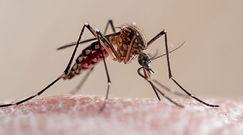 Sposoby na odstraszenie komarów. Dr Michał Sutkowski radzi, jak się ich pozbyć