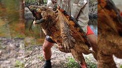 Żółw sępi. W rzece na Florydzie złapali nowy gatunek gada
