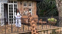 Karmi z balkonu żyrafę. Niezwykłe nagranie z Kenii