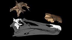 Sensacja na plaży w Anglii. Odkryli kości dwóch nieznanych gatunków dinozaurów