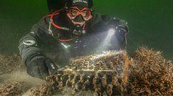 Zaskakujące odkrycie nurków na dnie Bałtyku