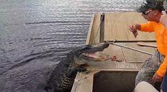 """Karmienie aligatora. Nagrał """"przyjaznego"""" gada"""