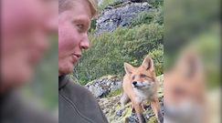 Bardzo bliskie spotkanie z lisem. Niezwykłe nagranie fotografów przyrody z Norwegii