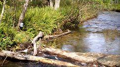 Przeprawa przez rzekę. Nagranie z ukrytej kamery
