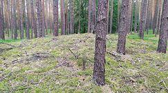 Prastara kurhanowa nekropolia w lesie. Niezwykłe odkrycie archeologiczne w Lubuskiem