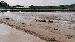 Dramat rolników, pogoda zniszczyła plony. Kołodziejczak: Odszkodowań nie będzie, ministerstwo odmówiło
