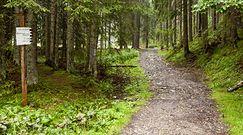 I ty dożyjesz tych czasów. 75 proc. lasów w Polsce umrze