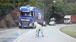 """Kucyk uciekał drogą krajową. Gonili go policjanci ze specjalnej grupy """"SPEED"""""""
