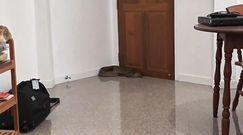 Gigantyczna kobra w salonie. Przerażające, co Tajlandczyk znalazł w kącie