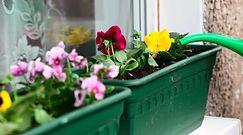 Sadzenie roślin w czerwcu. Sprawdź, jakie prace ogrodowe warto teraz wykonać