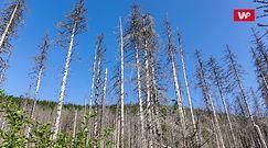 Zmiany klimatyczne a owady. Sytuacja w polskich lasach jest na bieżąco monitorowana