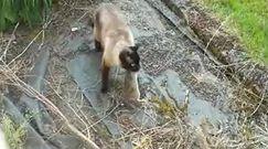 Wielka, królicza ucieczka. Kot nie mógł zrozumieć, co się stało
