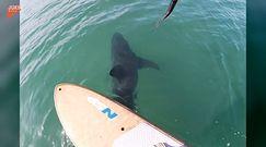 Rekin podpłynął niebezpiecznie blisko. Przypadkowe nagranie z USA
